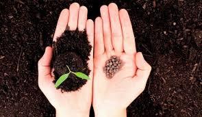 семена огурцов самоопыляемые